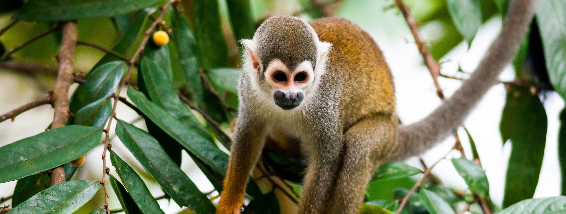Ecuador Amazon Tours
