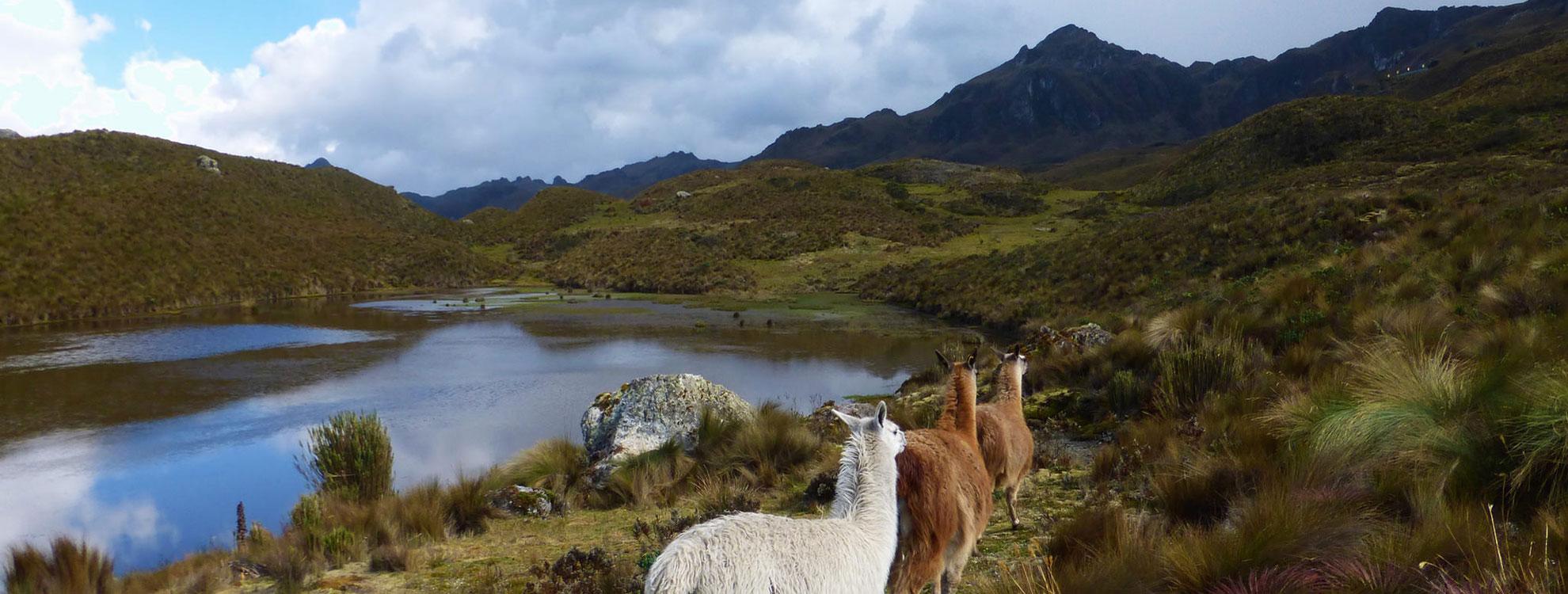 Ecuador Andes Tours