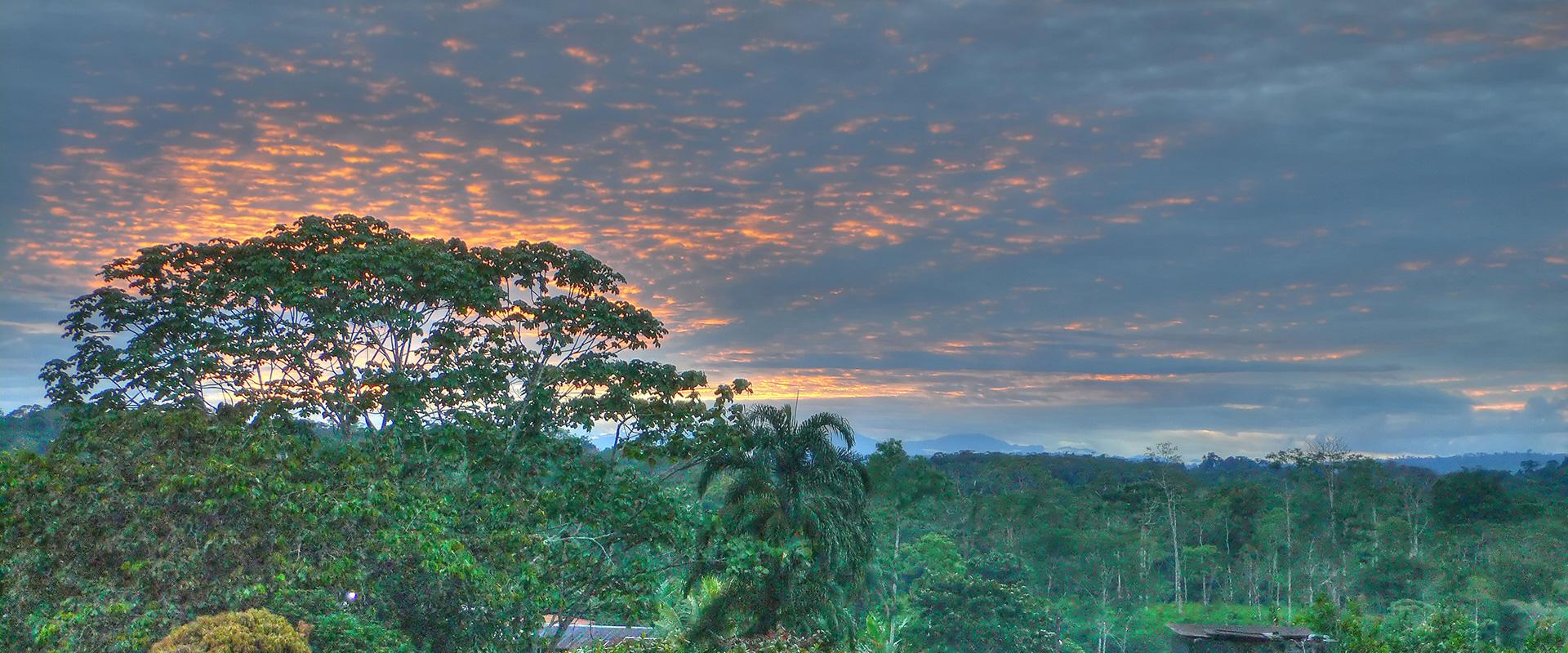 Amazon Rainforest Sunset