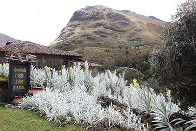 Cajas National Park Tour 1 Day