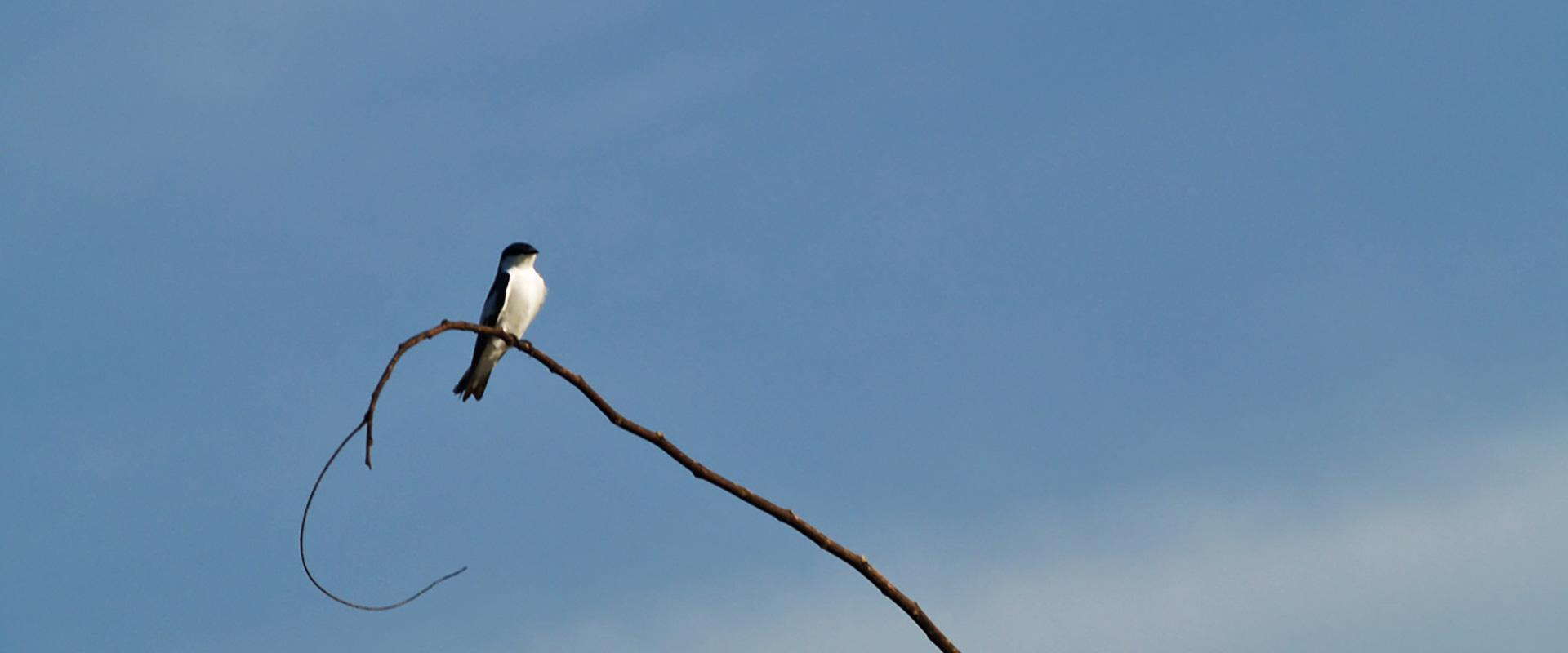 Kapawi Amazon Bird