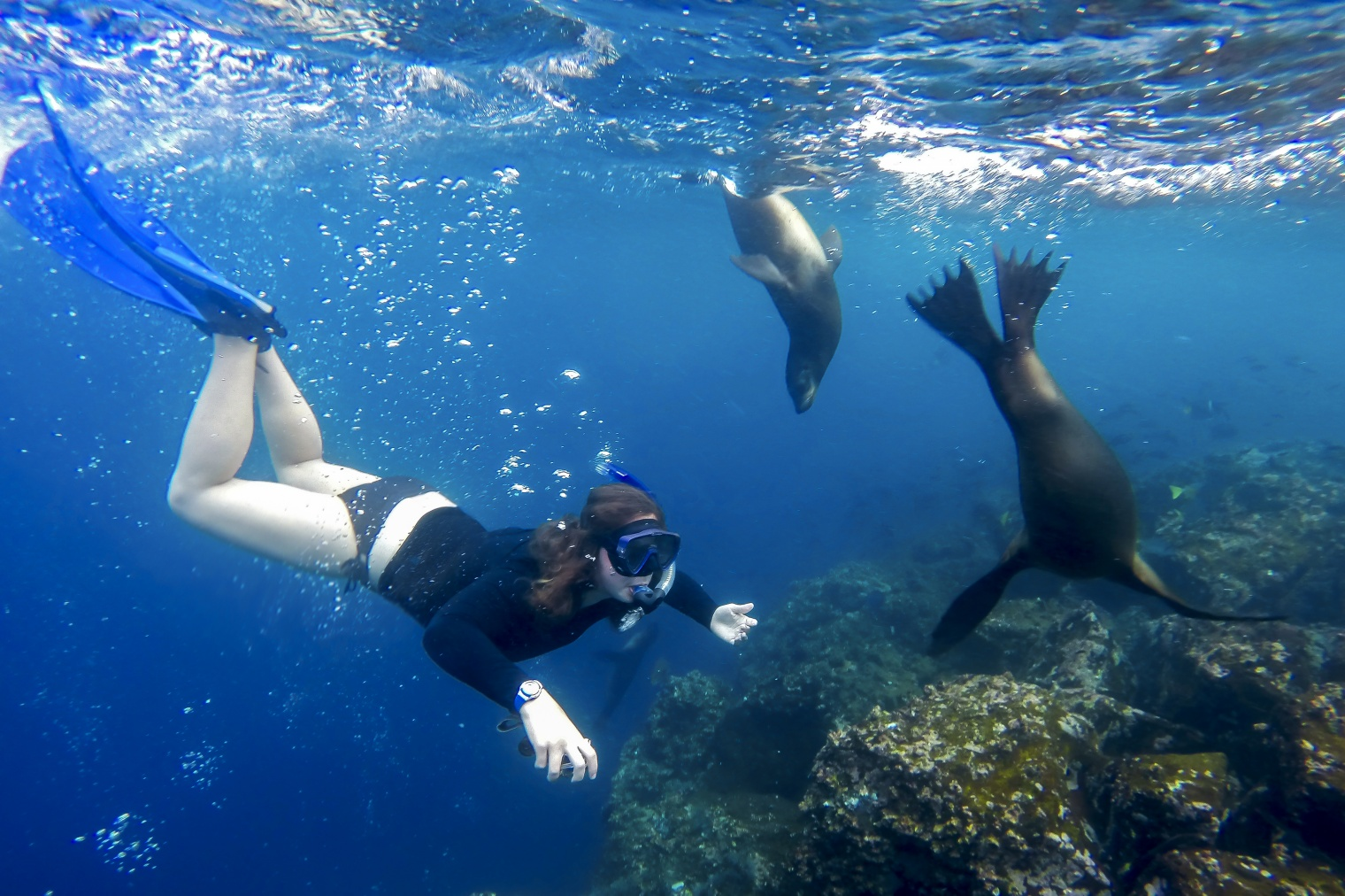 Galapagos Snorkeling Diving