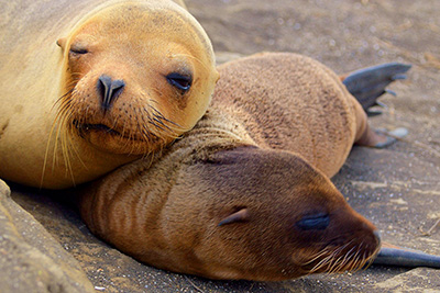 Santa Cruz western Galapagos Islands 5 Days